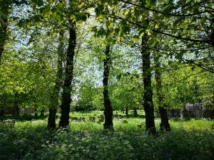 Spring in Bury St Edmunds