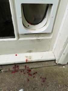 Picture of cat flap and doorstep with drips of blood